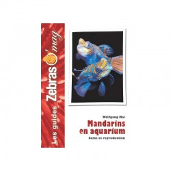Mandarins en Aquarium- Guide de soins et reproduction
