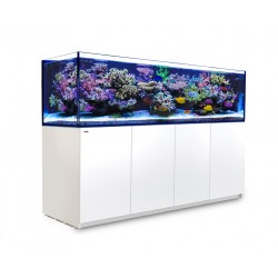 RED SEA REEFER 3XL 900- Blanc