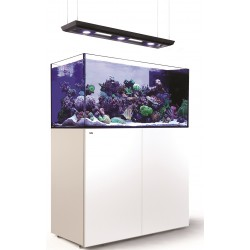 RED SEA REEFER Peninsula Deluxe 500- Blanc