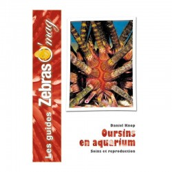 Oursins en aquarium- Guide de soins et reproduction