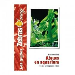 Algues en aquarium marin- Guide de soins et reproduction