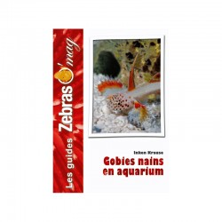 Gobies nains en aquarium- Guide de soins et reproduction
