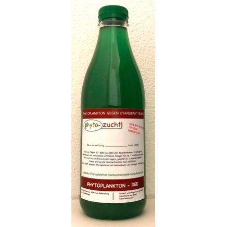 PHYTO-ZUCHT Phytoplankton-Red- Phytoplankton frais