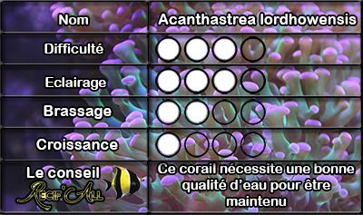 acanthastrea%20lordhowensis.jpg