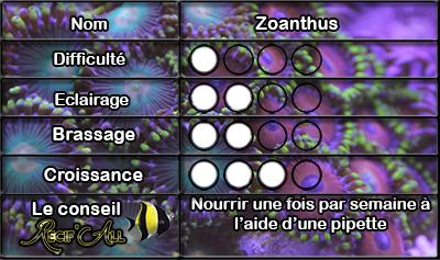 zoanthus_1.jpg